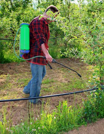 Agricultor rociar herbicida con pulverizador en un huerto de manzanas