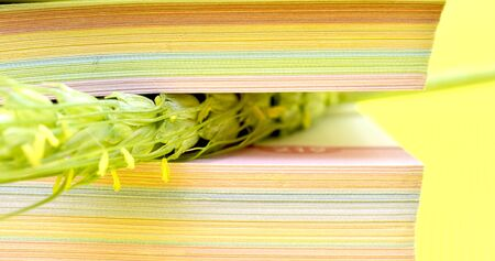cereal plant ears close up between book pages. Selective focus. knowledge and agriculture concept