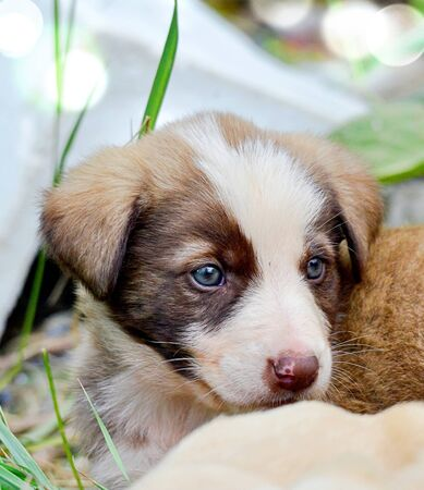 image of a cute stray puppies pictured in a garbage dump