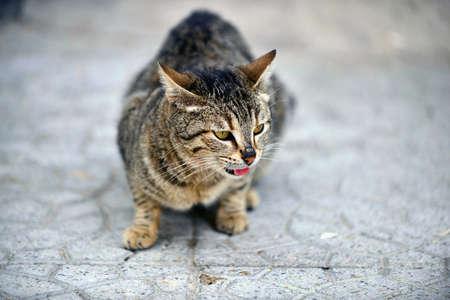 Stray cat,on the street pavement image Archivio Fotografico