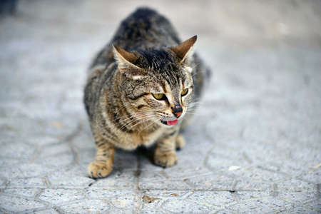 Stray cat,on the street pavement image Imagens