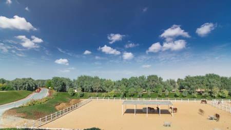 arabian horse runs inside paddock in the dust desert timelapse hyperlapse with blue cloudy sky, UAE Stockfoto