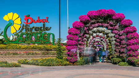 DUBAI, UAE - CIRCA JANUARY 2017: Entrance to Dubai miracle garden timelapse with over 45 million flowers in a sunny day, United Arab Emirates. Arch are made from flowers
