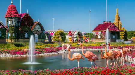 DUBAI, UAE - CIRCA JANUARY 2017: Lake with fountain and flamingo at Dubai miracle garden timelapse with over 45 million flowers in a sunny day, United Arab Emirates. House are made from flowers