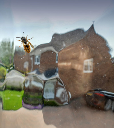 In English Spring,wasp season starts about now in the uk,and they appear seemingly from nowhere. I opened the window to free the critter. Stock Photo