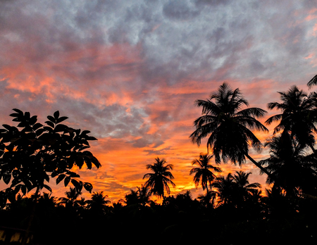 Beautiful layers of cloud and glowing sky above silhouettes of palm trees soon after the sun had set.