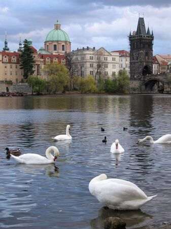 francis: View of Charles Bridge over River Vltava with Swans and ducks in foreground, and Church of St. Francis of Assisi in distance, Prague Czechoslovakia