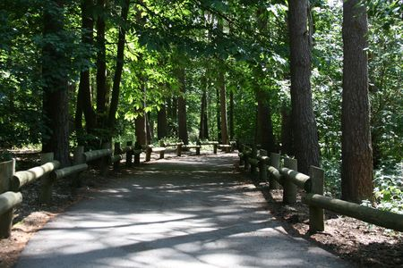 Dark shadow cast on path in forest, England photo
