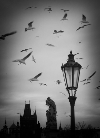 Seaguls flying around lamp on Charles Bridge over the River Vltava, Prague photo