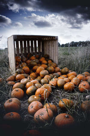 Dark skies and pumpkins photo