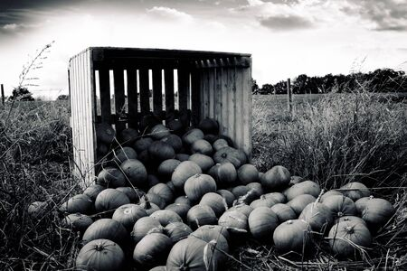 Pumpkins fallen from wooden crate photo