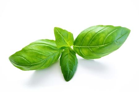 basilico: hojas de albahaca sobre fondo blanco