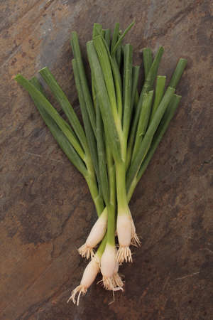 spring onions: fresh spring onions on slate