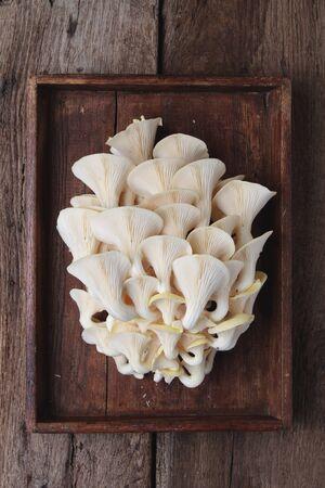wild mushrooms: wild mushrooms Stock Photo