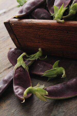 tout: fresh purple mangetout Stock Photo