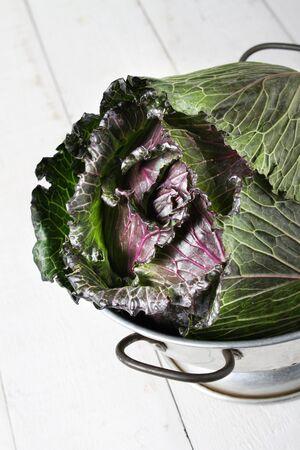 spring king cabbage