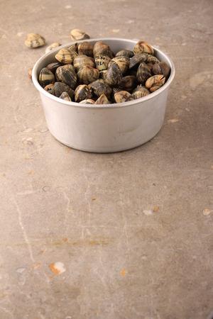 clam: fresh clam shelfish