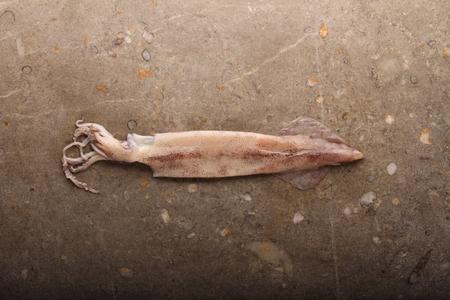 plaice: fresh fish seafood