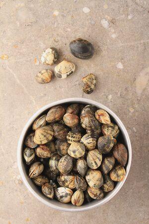 clam: fresh clam shellfish in metal dish