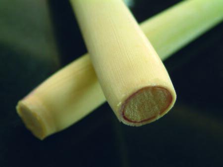 acidic: lemon grass stem