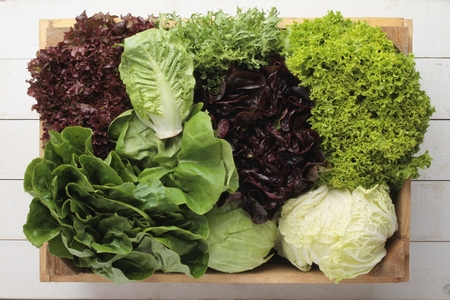 fresh picked whole lettuce varietys