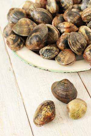 shell fish: fresh clam shell fish
