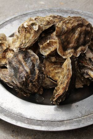 bivalve: fresh closed oysters
