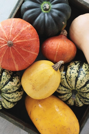 fruit and veg: squash vegetable selection