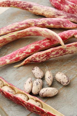 berlotti beans Archivio Fotografico