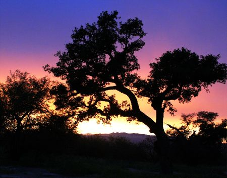 A spreading oak tree at the mouth of Madera Canyon in the Santa Rita Mountains of southeastern Arizona casts a breathtaking silhouette before the setting sun and the multicolored twilight sky. photo