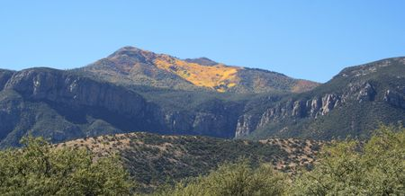 On Carr Peak in the Huachuca Mountains, Cochise County, southern Arizona, the aspen trees turn golden each and every fall. photo
