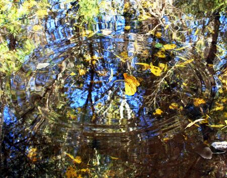 A freshly fallen cottonwood leaf caused this autumn mosaic of water ripples, reflections, rings and leaves.