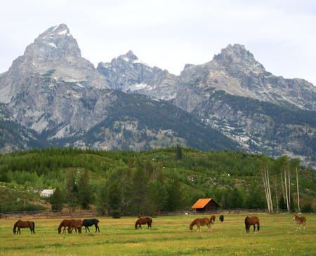 Horses Graze as the Teton Range Rises Majestically Behind the Herd photo