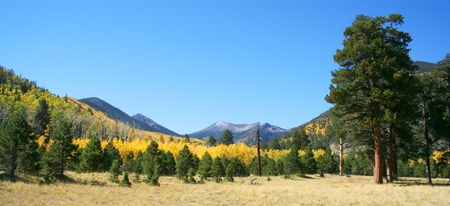 mount humphreys: Aspen and ponderosa pine in the San Francisco Peaks, northern Arizona, with snow-dusted Mount Humphreys on the skyline