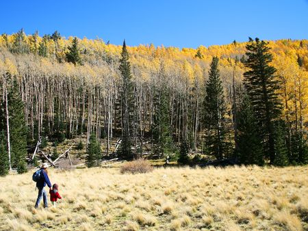 A woman hiker walks hand-in-hand with a child amongst the aspen and pine in the San Francisco Peaks, northern Arizona photo