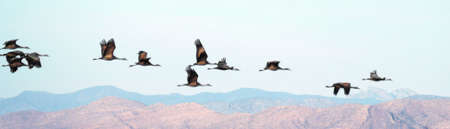 A Flock Soars Above Cochise Imagens