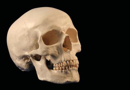 beenderige: Een schuine Facing Human Skull On Black