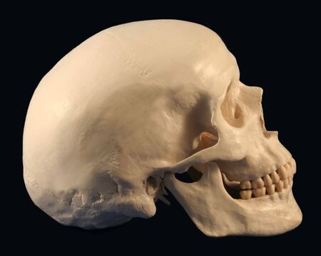 A Side View of a Human Skull On Black