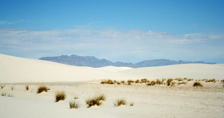 Grasses in White Sands National Monument, New Mexico Stock Photo - 5127716