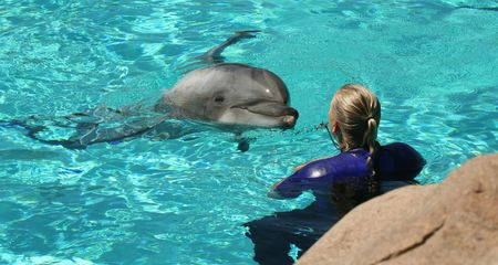 cetaceans: A Blonde Female Trainer Works with a Bottlenosed Dolphin in the Water