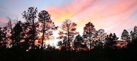 ponderosa: A Fiery Sunset Over a Stand of Ponderosa Pines
