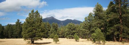 mount humphreys: A View of the San Francisco Peaks Through the Ponderosa Pines Stock Photo