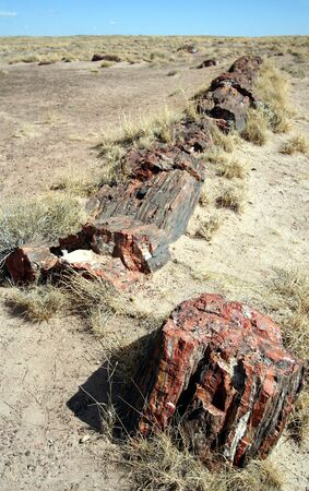 A Petrified Log in Petrified Forest National Park, Arizona photo