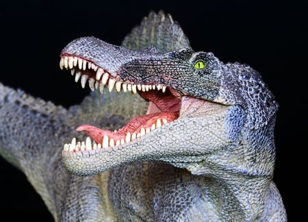 A Spinosaurus Dinosaur Close Up Against a Black Background