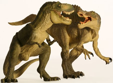 A Spinosaurus and Tyrannosaurus Battle Against a White Background