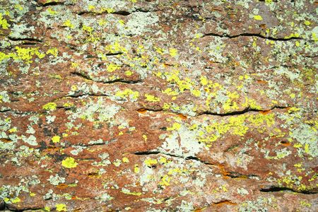algal: A Mix of Green, Yellow, Orange and Black Lichens on Rhyolite Rock Stock Photo