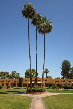 awnings: A Trio of Palms at a Health Resort Hotel in the American Southwest