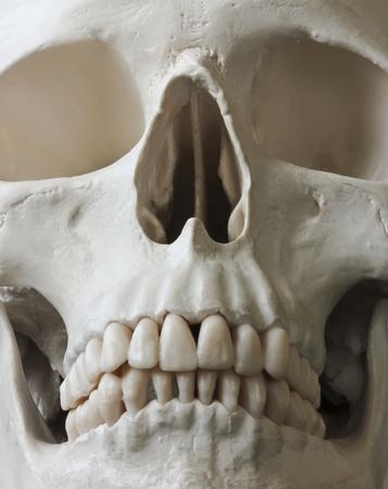 cr�nes: Une vue rapproch�e du visage d'un cr�ne humain