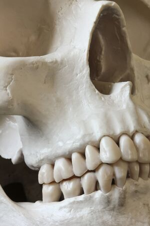 grin: A Close Up View of the Face of a Human Skull