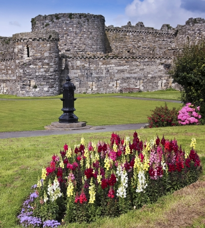 slits: Beaumaris, Wales - July 21: Beaumaris Castle on July 21, 2012, in Anglesey, Wales. A gorgeous patch of snapdragons bloom at Beaumaris Castle, a popular tourist destination.